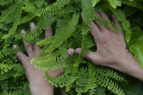 Cally Trench, Hands of Ahmed Farooqui with Adiantum Pedatum, 16th June 2019